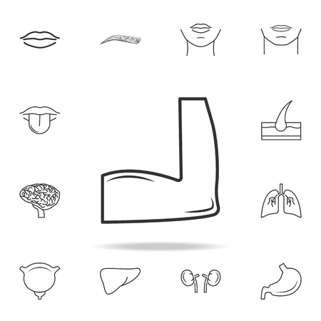 Flexing bicep muscle icon with other elements vector illustration