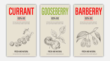 Vector hand drawn fruits of currant, gooseberry and barberry posters. Vintage style healthy food concept for farmers market menu design on blackboard Ilustracja