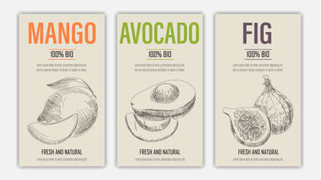 Vector hand drawn fruits of mango, avacado and fig posters. Vintage style healthy food concept for farmers market menu design on blackboard Ilustracja