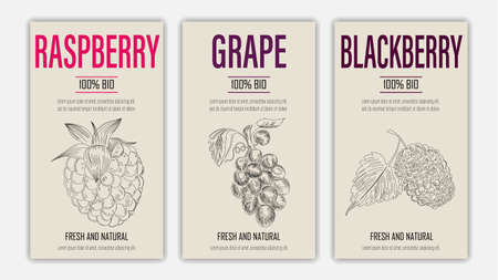 Vector hand drawn fruits of raspberry, grape and blackberry posters. Vintage style healthy food concept for farmers market menu design on blackboard