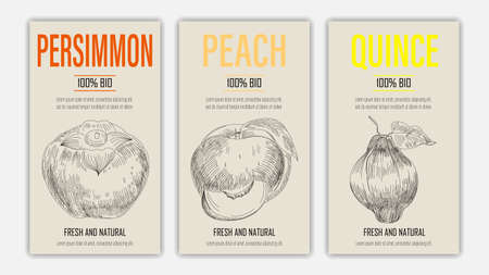 Vector hand drawn fruits of persimmon, peach and quince posters. Vintage style healthy food concept for farmers market menu design on blackboard