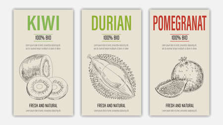 Vector hand drawn fruits of kiwi, durian and pomegranate posters. Vintage style healthy food concept for farmers market menu design on blackboard