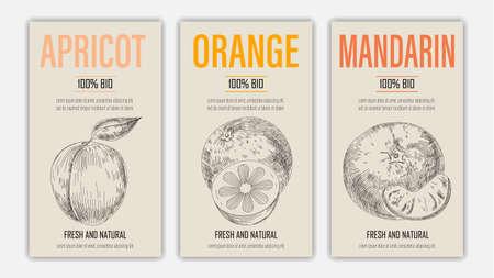 Vector hand drawn fruits of apricot, orange and mandarin posters. Vintage style healthy food concept for farmers market menu design on blackboard Vektorgrafik