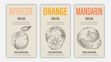 Vector hand drawn fruits of apricot, orange and mandarin posters. Vintage style healthy food concept for farmers market menu design on blackboard Ilustracja