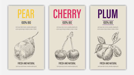 Vector hand drawn fruits of pear, cherry and plum posters. Vintage style healthy food concept for farmers market menu design on blackboard Ilustracja