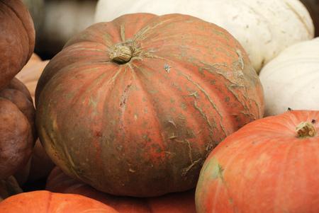 Pumpkin at Halloween and pumpkin market in USA.