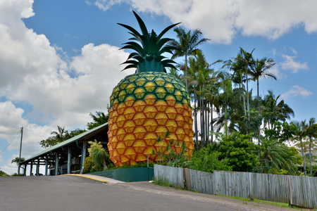 Woombye, Queensland, Australia - December 17, 2017. 16m-high Big Pineapple in Woombye, with buildings and vegetation.