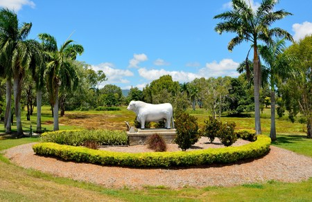 Rockhampton, Queensland, Australia - December 28, 2017. Statue of Romagnola bull at OShanesy Park on the north-eastern side of the intersection of the Bruce Highway and Jellicoe Street in Allenstown district of Rockhampton, QLD Editöryel