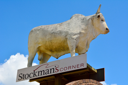 Rockhampton, Queensland, Australia - December 28, 2017. Statue of Big White Bull on roof of a commercial building on Gladstone Road in Rockhampton, QLD