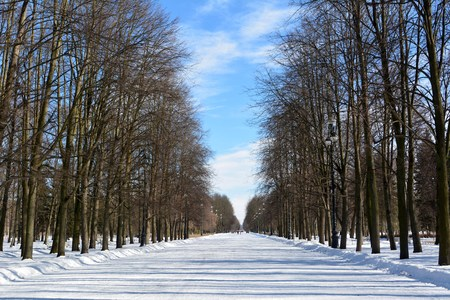 Alley in Maritime Victory Park in St Petersburg, Russia, in winter. Editorial
