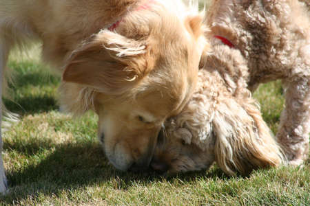 sniffing: Dogs Sniffing Together Stock Photo