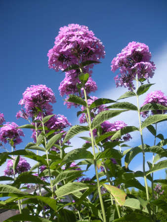 bunched: Flowers in the sky Stock Photo