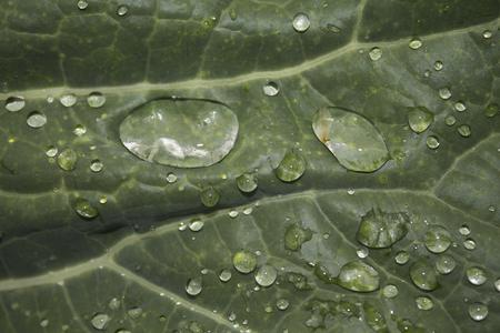 insipid: Dew on the green grass in the garden. Photo.