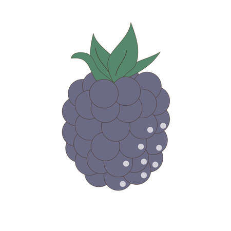 Blackberries on a white background. Blue berry. Illustration. Illusztráció