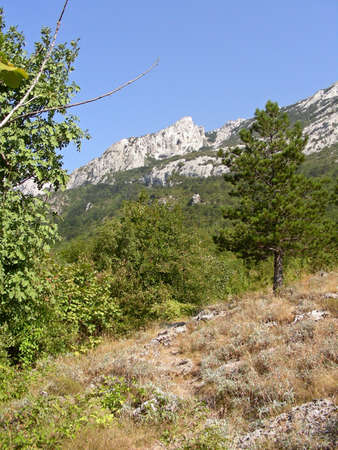 paklenica:    Nature arround you in Paklenica National Park while trekking        Stock Photo