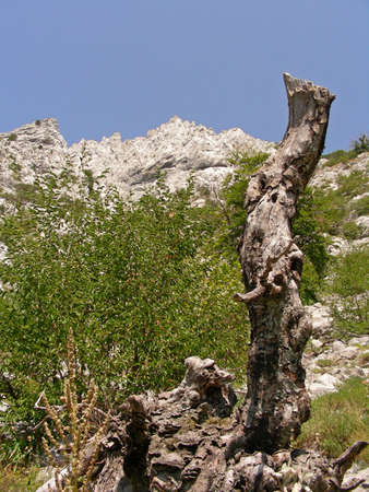paklenica:             Nature arround you in Paklenica National Park while trekking
