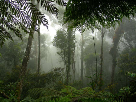 A misty rainforest in the middle of Borneo photo