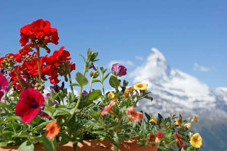 matterhorn: Colorful flowers and Mt. Matterhorn in the background Stock Photo