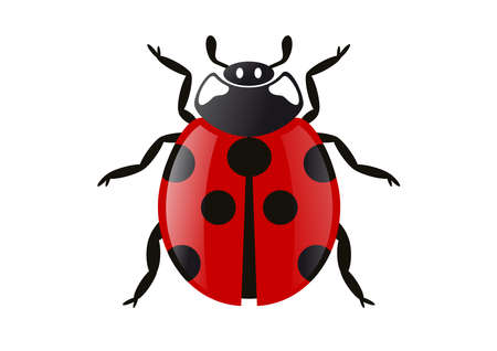 Vector illustration of a ladybug Vector
