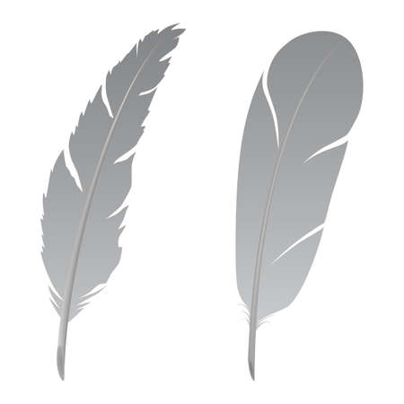 quills: Feather