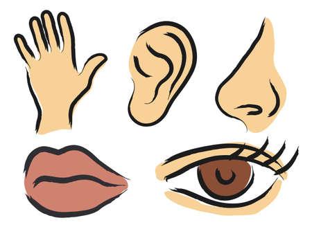 Iconos del vector de sentidos humanos