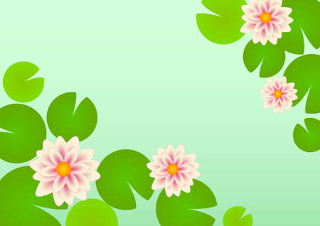lily vector: Water lilies