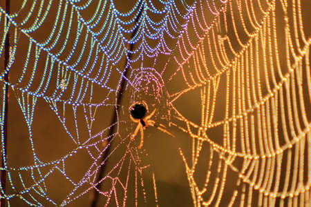 dewy: Close up of colors refracted on a dewy spider web.
