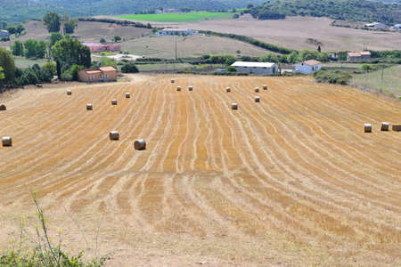 yellow hay field in the Sardinia countryside photo