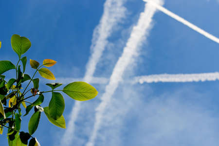 walnut leaves under several chemtrails