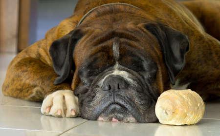dog sleeping close to his breadroll photo