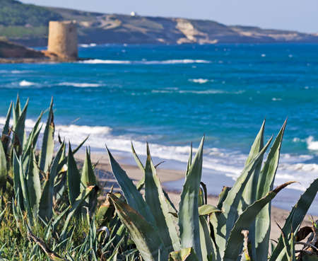 tower of Abbacurrente, Sardinia with agaves on the foreground Stock Photo - 16965534