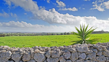 drystone: landscape with dry-stone wall and yucca plant on a cloudy day Stock Photo