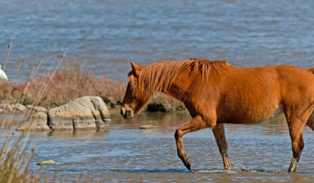 beast ranch: brown horse in a pond Stock Photo