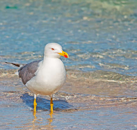 foreshore: seagull standing on the foreshore Stock Photo