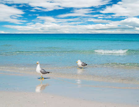 foreshore: two seagulls on a turquoise foreshore