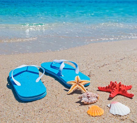 foreshore: shells, starfish and flip-flops on the foreshore