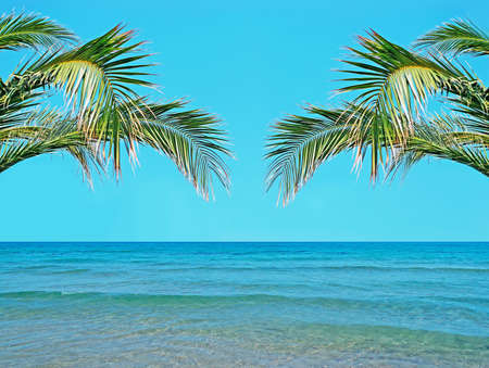 palm trees over a turquoise sea photo