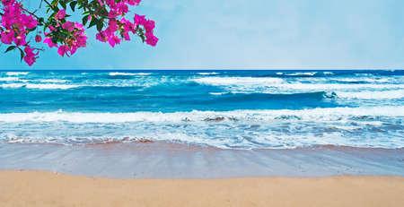 bougainvillea flowers: bougainvillea by a golden shore