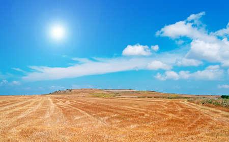 lens flare: lens flare su un campo del paese giallo