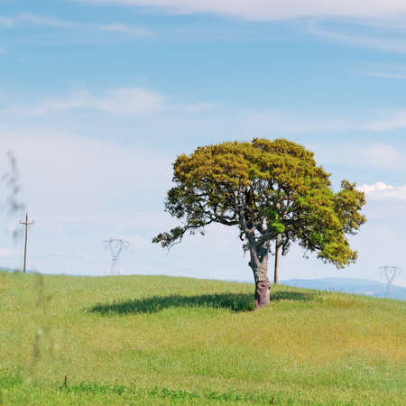 trees in a green meadow photo