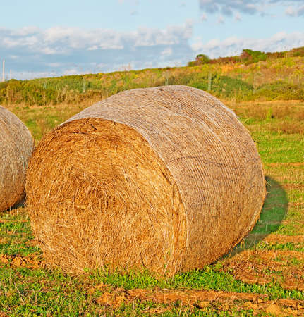 hayroll: hay bale on a field at sunset