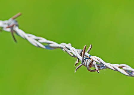 barb wire on green background photo