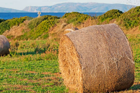 hayroll: hat bale on a field at sunset