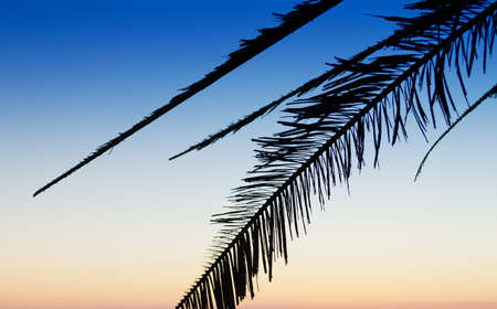 palm branch: palm branch silhouette at dusk Stock Photo