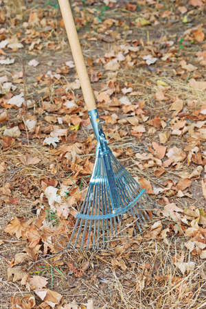 metal rake and yellow leaves photo