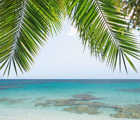 palm branches over a blue sea