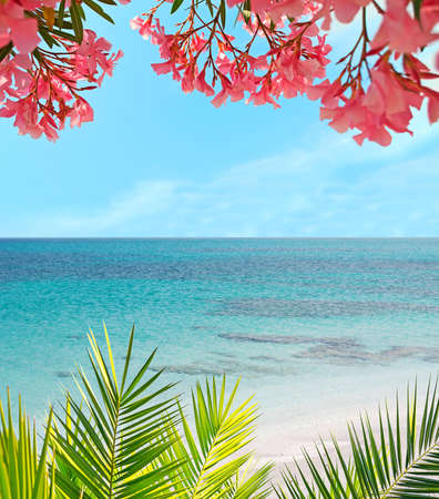 palm and flowers in a tropical beach photo
