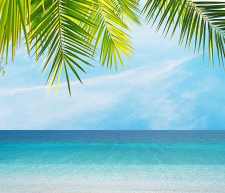 palm leaves by the shore