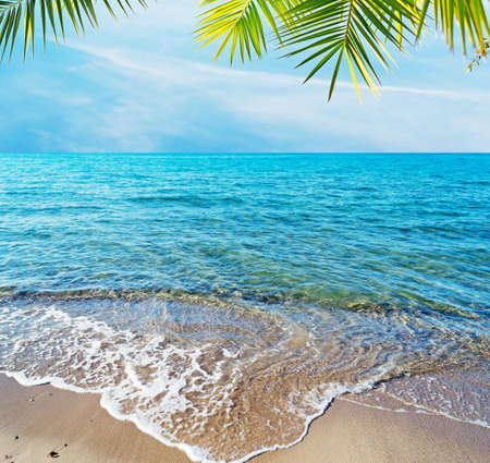 tropical beach with palm and sand photo