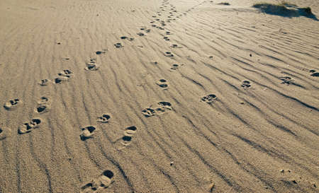 footsteps in the sand at dusk photo